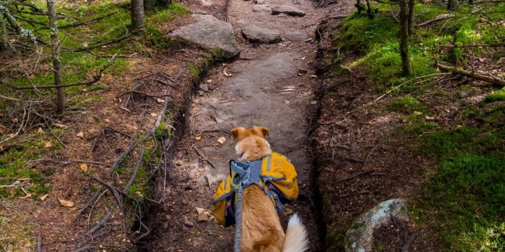 Taking the pooch out on the trails is awesome - Best Dog Backpacks For Hiking