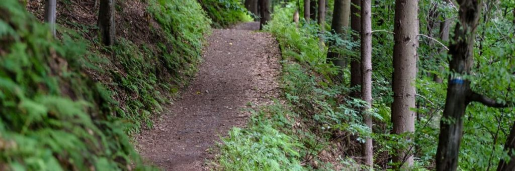 Trail start and a path - What to Know Before Hiking the Appalachian Trail